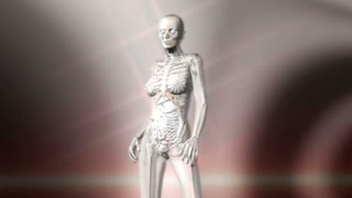 Digital 3D Animation of the female human Anatomy