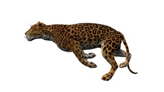 leopard runs,loop, animation, Alpha channel