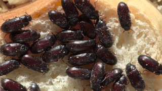 small bugs on a piece of bread