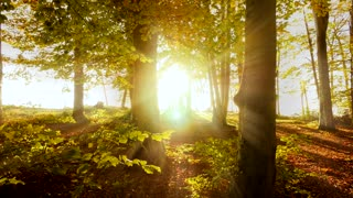autumn fall nature background. sunbeam light shining through forest trees