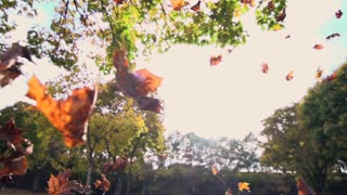 autumn leaves. fall season nature. colorful leaves. slow motion