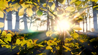 branch of tree background. sunbeam shining through. autumn fall season