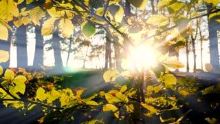 branch of tree background. sunbeam shining through. autumn fall season