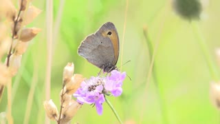 butterfly. insects. fauna and flora. slow motion