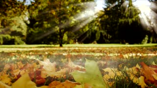 colorful autumn nature background. fall tree leaves on ground. sunbeam light