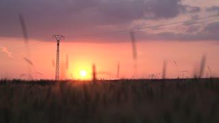 cornfield agriculture sunset