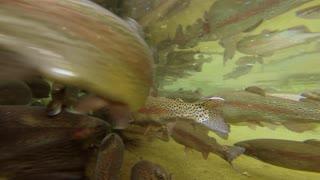 fish industry - fishing - fresh fish - sea lake pond - animal background
