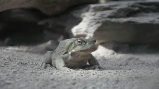 frog. amphibian animals background