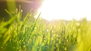 green grass field background. farming harvesting ecology scene. vibrant vivid