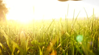 hand moving over grass field flowers. magical vivid light. touching nature