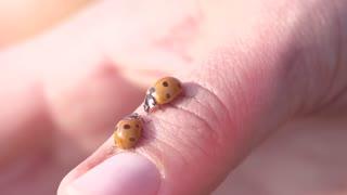ladybird ladybug slow motion