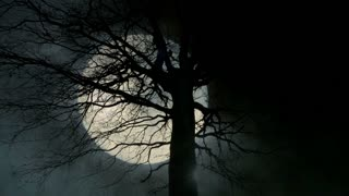 large moon behind tree. mystic night sky. background. trees silhouette