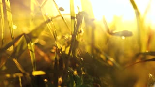 macro close up of grass field flower plants at sunset magic hour light