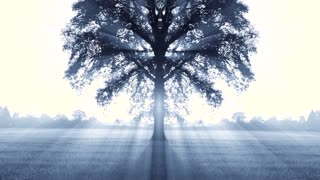 mystical tree background. beams of light. trees of life background