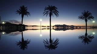 palm trees silhouette. beach coast background. sunrise light sky