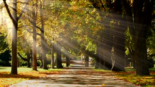 park tree alley pathway. autumn fall season background. sunbeam light effect