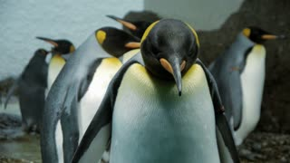 penguin. penguin swimming. sea life. ocean animals background