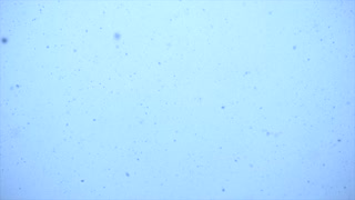 slow motion of snow flakes falling from sky. white winter background