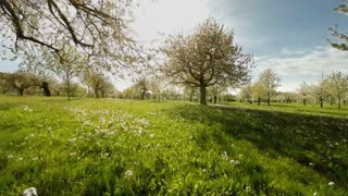 springtime trees. plants nature background. summertime. aerial view