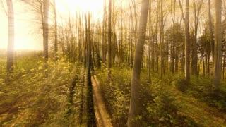 sun rays. sunbeam. trees silhouette background. beaming light. nature. fantasy