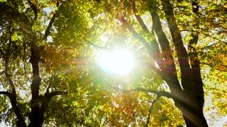 sun shining through branches of tree. autumn nature background. fall season