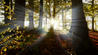 sunbeam light shines through silhouette of forest trees