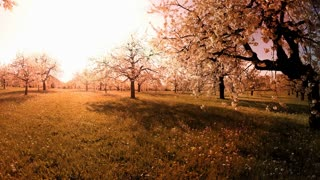 sunset trees background. spring flowers plants. nature. summertime. aerial view