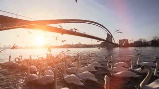 swarm of birds. sunset dusk. bridge. lake pond. slow motion