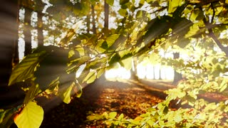 tree leaves branches. light beam effect. colorful nature. mystical background