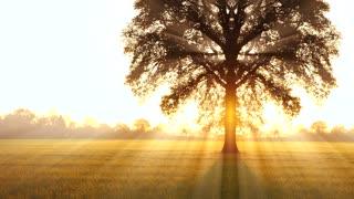 tree of life background. sunbeam shining through. autumn fall season