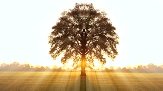 tree of life background. sunbeam sunset silhouette. colorful nature background