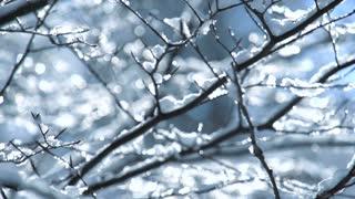 beautiful winter snow fall background