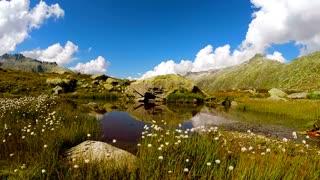 environment ecology landscape nature scenery background