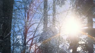 snow falling during winter season in the forest. shot in slow motion