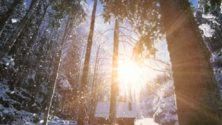 snow forest winter wonderland shot in slow motion