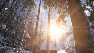 snow forest winter wonderland shot in slow motion