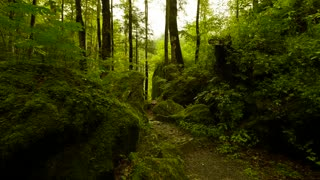 walking trough forest. woods trees. green nature background