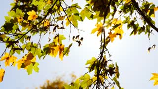 wind breeze moving tree branches around. autumn fall season background