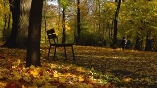 Beautiful park in the autumnal season, steadycam shot, slow motion shot at 240fp