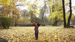 Boy touching leaves with a stick, steadycam shot, slow motion shot at 240fps