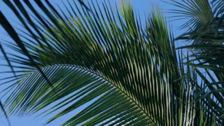 Close up of moving palm tree in the wind