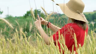Girl looking on smartphone while standing in the grain field