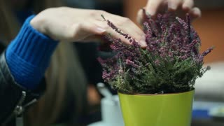 Girl sitting by the table and touching purple plant, steadycam shot