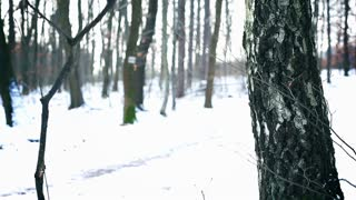 Jogger running on snowy path in the forest, steadycam shot, slow motion shot