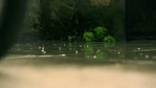 Raindrops falling on pavement, slow motion shot