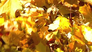 Someone walking on the ground full of leaves, slow motion shot