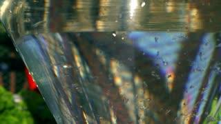 Strawberries falling into water, closeup, slow motion shot