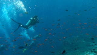 Man scuba diving under the water, slow motion shot at 240fps, steadycam shot