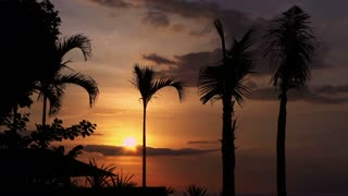View of beautiful sunset and palms moving by the wind, timelaps