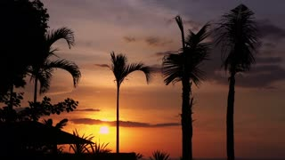 View of beautiful sunset and palms moving by the wind